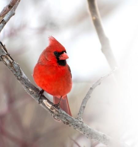 Winter Birds Seminar 2018